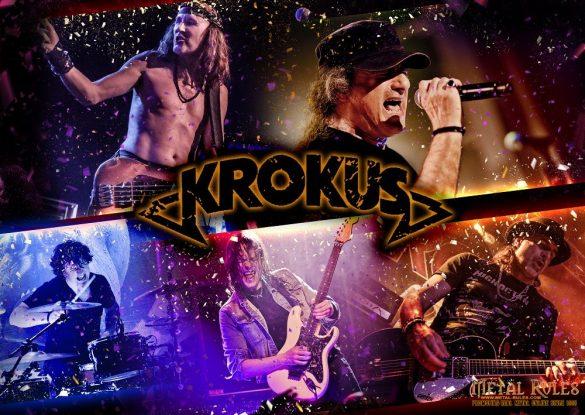 Krokus Low Res